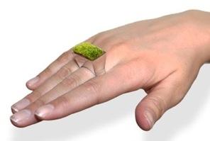 bague-herbe
